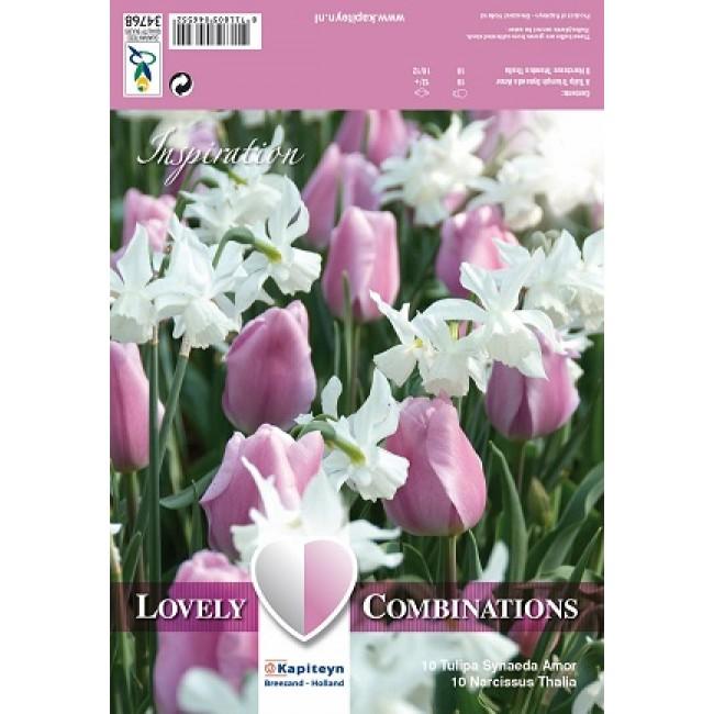 Tulip & Narcisscus Mixture