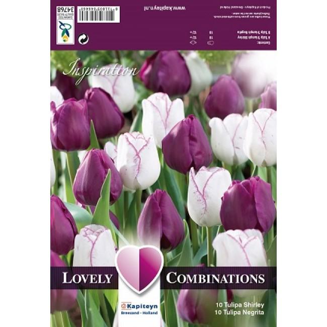 Tulip Combo Purple & White