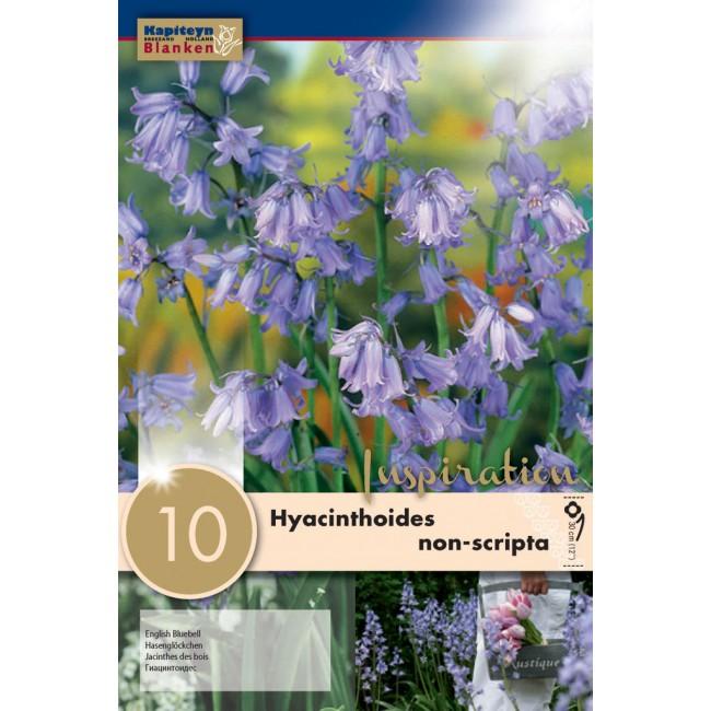 Bluebell Flower Bulbs